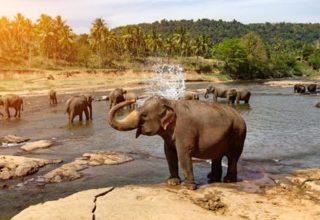 explorer-srilanka-gall3