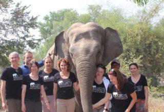 fta-group-elephant
