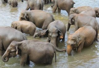 sri-lanka_elephants-washing