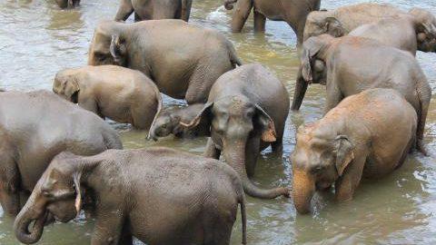 sri-lanka_elephants-washing